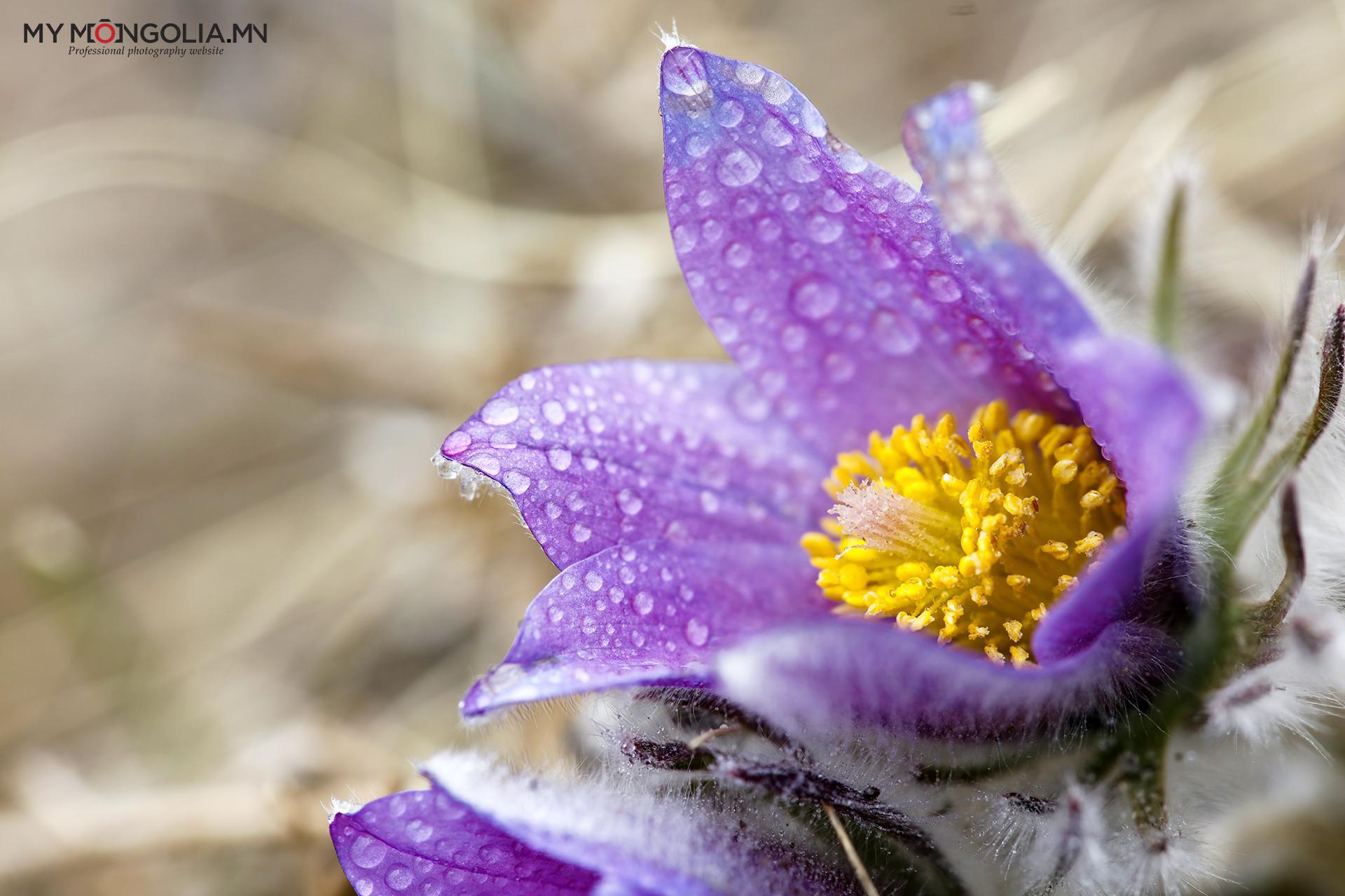 тав дугаар сарын цэцэг